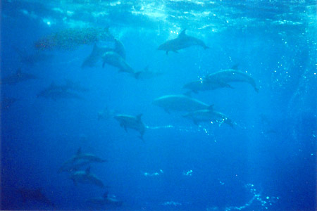 Dolphins Galore!