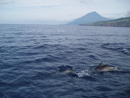 Dolphins with Mt. Pico