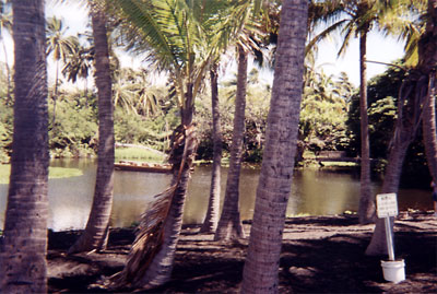 Blacksand beach pond