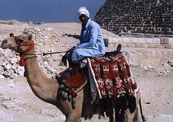 Abdul the cameljockey